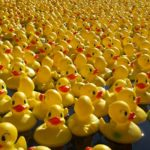 The Great Norwich Duck Race 2019